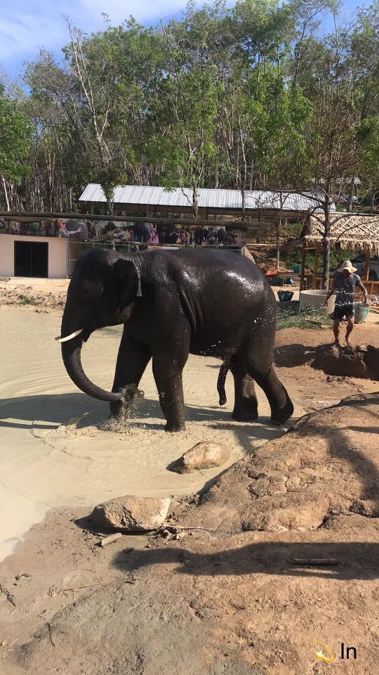 SANCTUARY ELEPHANT